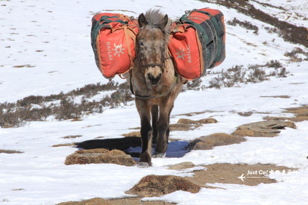 [中國] 日出登頂5025公尺·四川四姑娘山大峰雪地攀登2日遊記49_