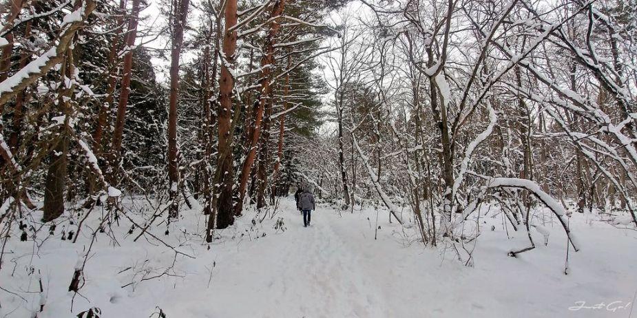 日本 - 福島·冬季戶外旅遊-猪苗代湖、五色沼健行05