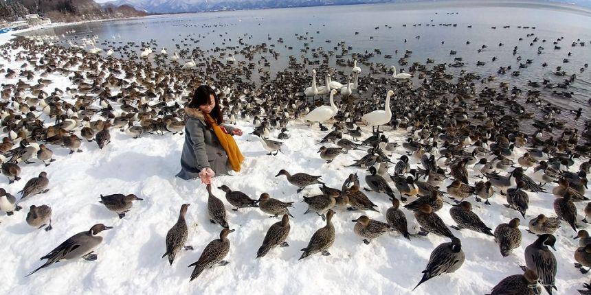 日本 - 福島·冬季戶外旅遊-猪苗代湖、五色沼健行12