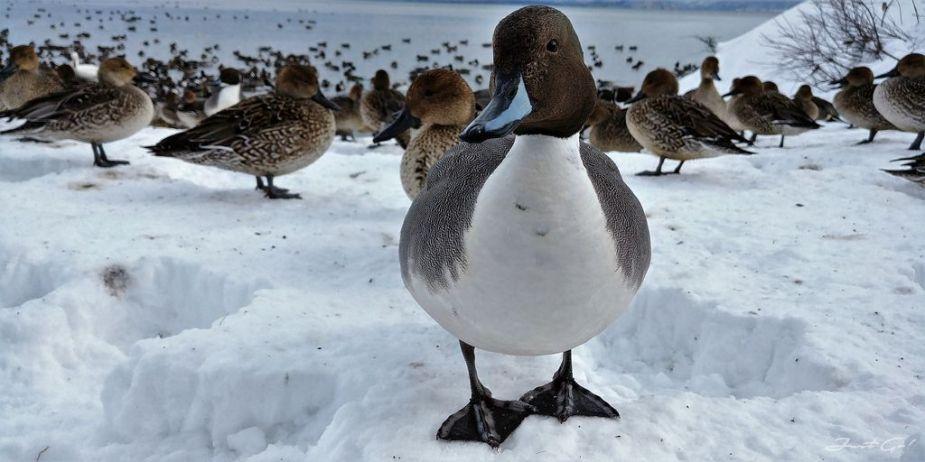 日本 - 福島·冬季戶外旅遊-猪苗代湖、五色沼健行13