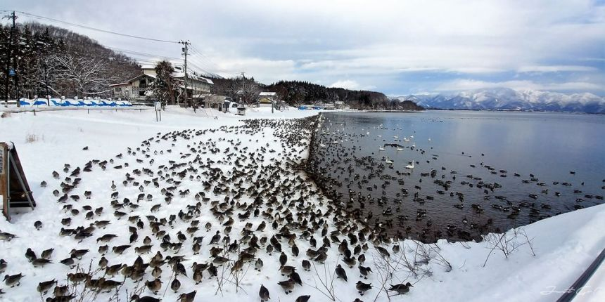日本 - 福島·冬季戶外旅遊-猪苗代湖、五色沼健行15