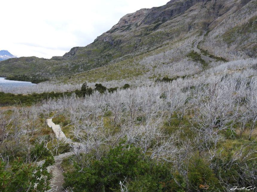 智利 - 【國家地理】一生必去景點·百內國家公園W健行4天遊記121