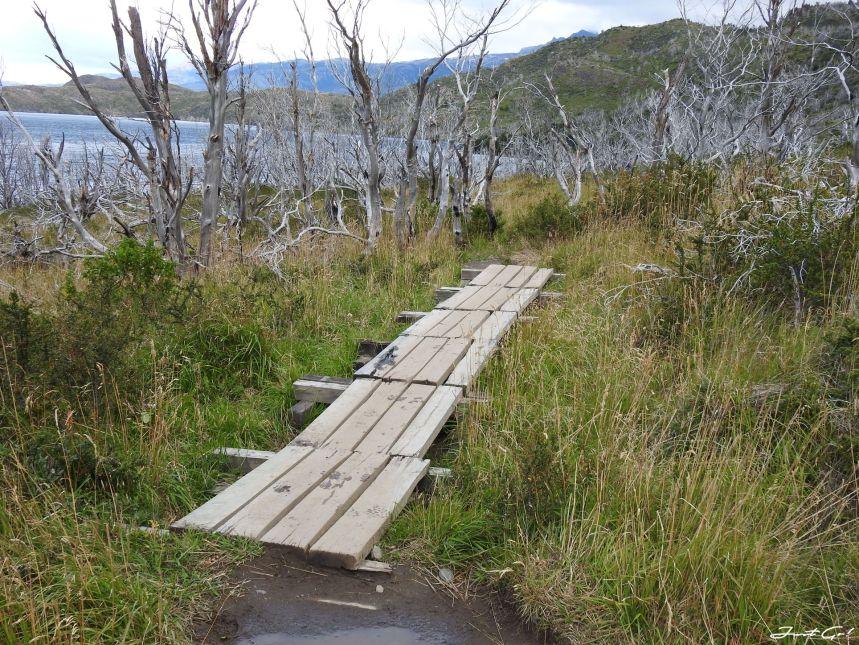智利 - 【國家地理】一生必去景點·百內國家公園W健行4天遊記122
