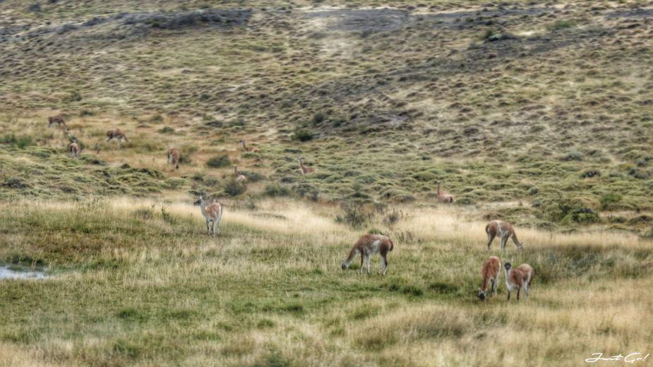 智利 - 【國家地理】一生必去景點·百內國家公園W健行4天遊記158