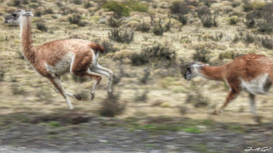 智利 - 【國家地理】一生必去景點·百內國家公園W健行4天遊記159