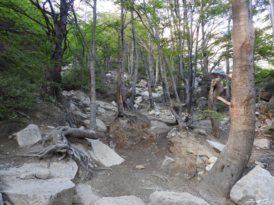智利 - 【國家地理】一生必去景點·百內國家公園W健行4天遊記33