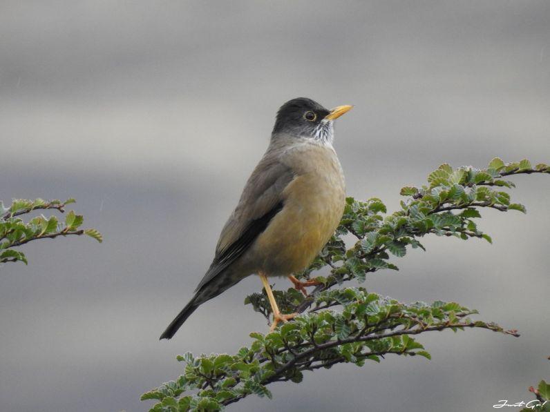 智利 - 【國家地理】一生必去景點·百內國家公園W健行4天遊記51