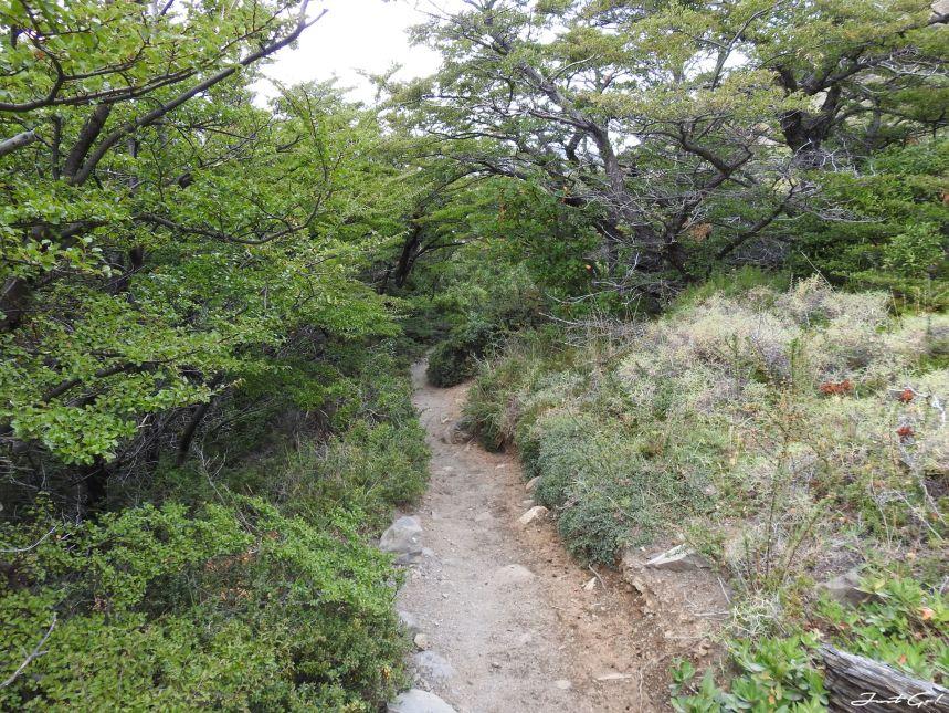 智利 - 【國家地理】一生必去景點·百內國家公園W健行4天遊記66