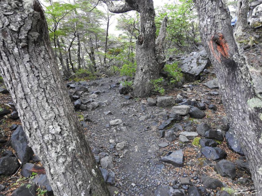 智利 - 【國家地理】一生必去景點·百內國家公園W健行4天遊記98