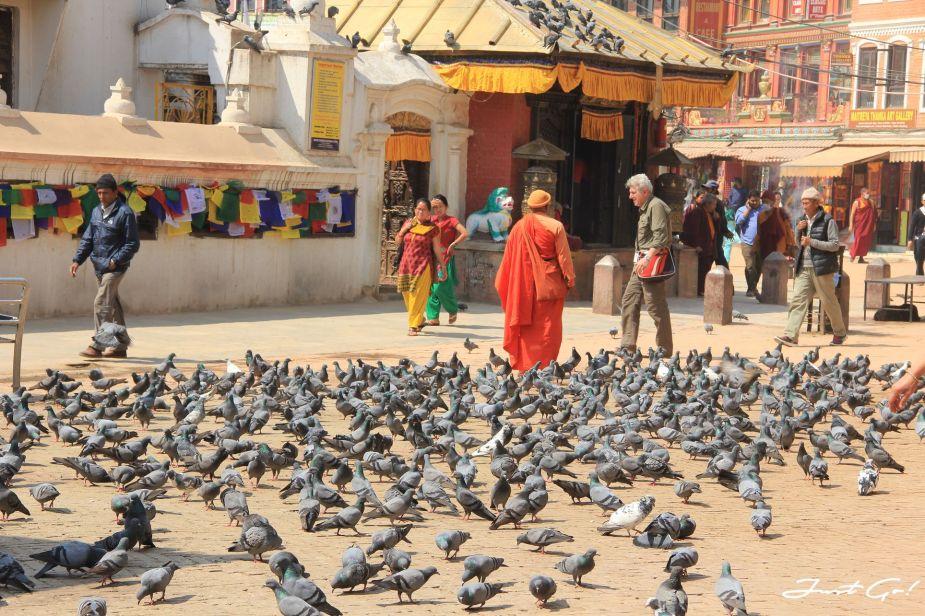 尼泊爾 - 自由行旅遊攻略懶人包-簽證、景點、換錢、交通、網路及住宿3