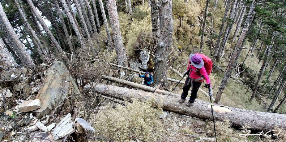 台灣 - 一日百岳·畢祿羊頭縱走單攻紀錄- gpx路線、申請、接駁及遊記14