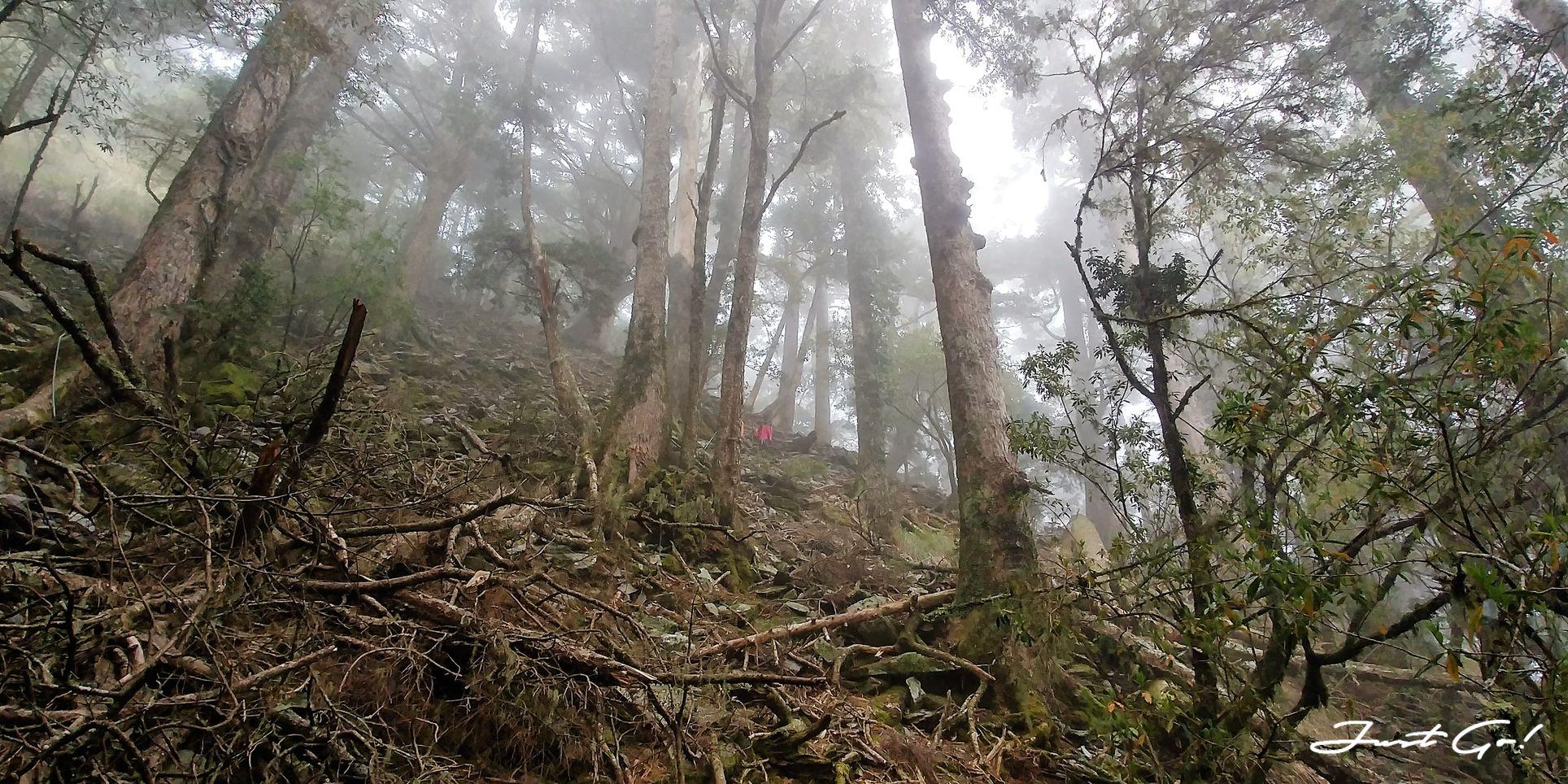 台灣 - 一日百岳·畢祿羊頭縱走單攻紀錄- gpx路線、申請、接駁及遊記19
