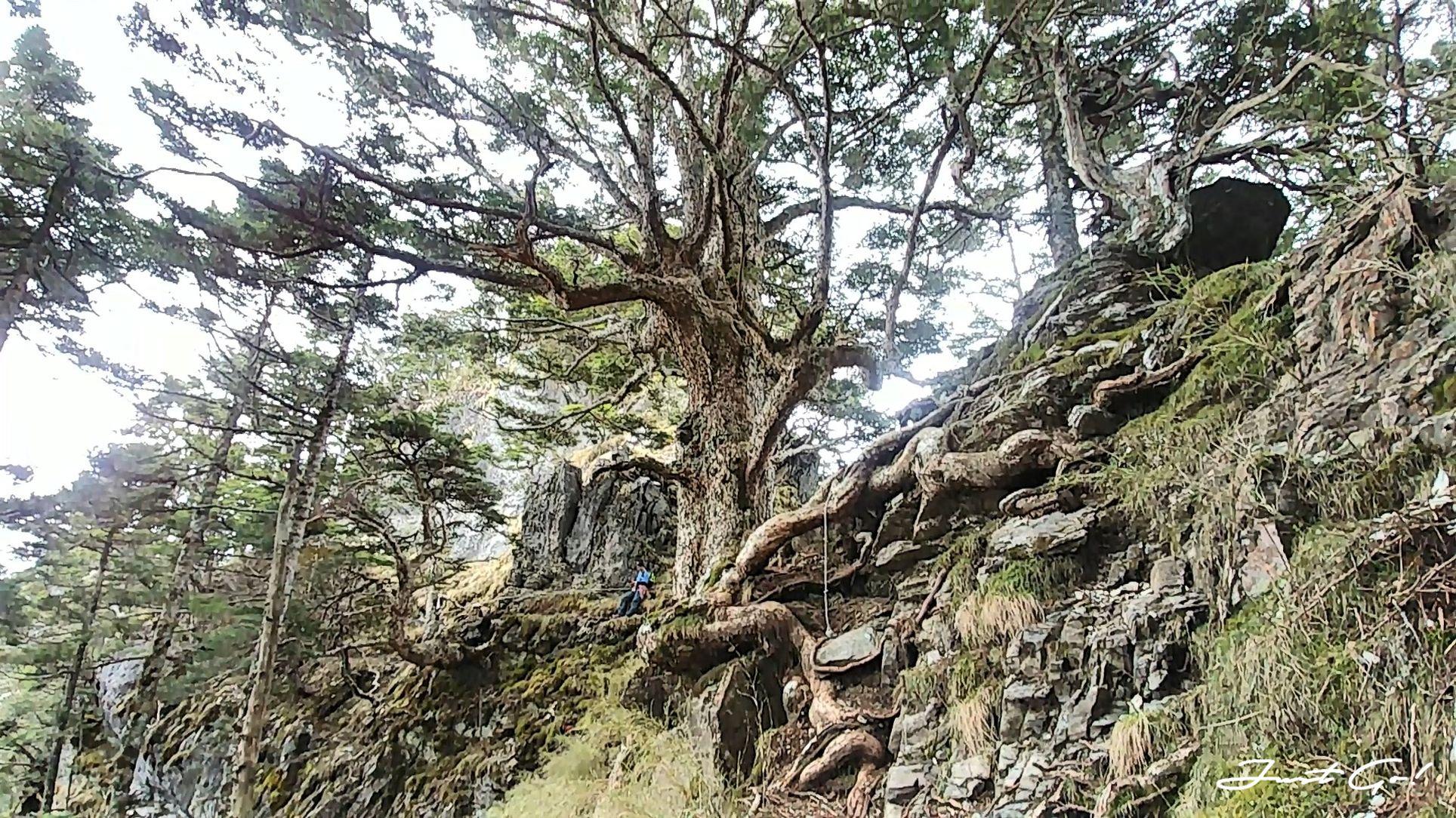 台灣 - 一日百岳·畢祿羊頭縱走單攻紀錄- gpx路線、申請、接駁及遊記27