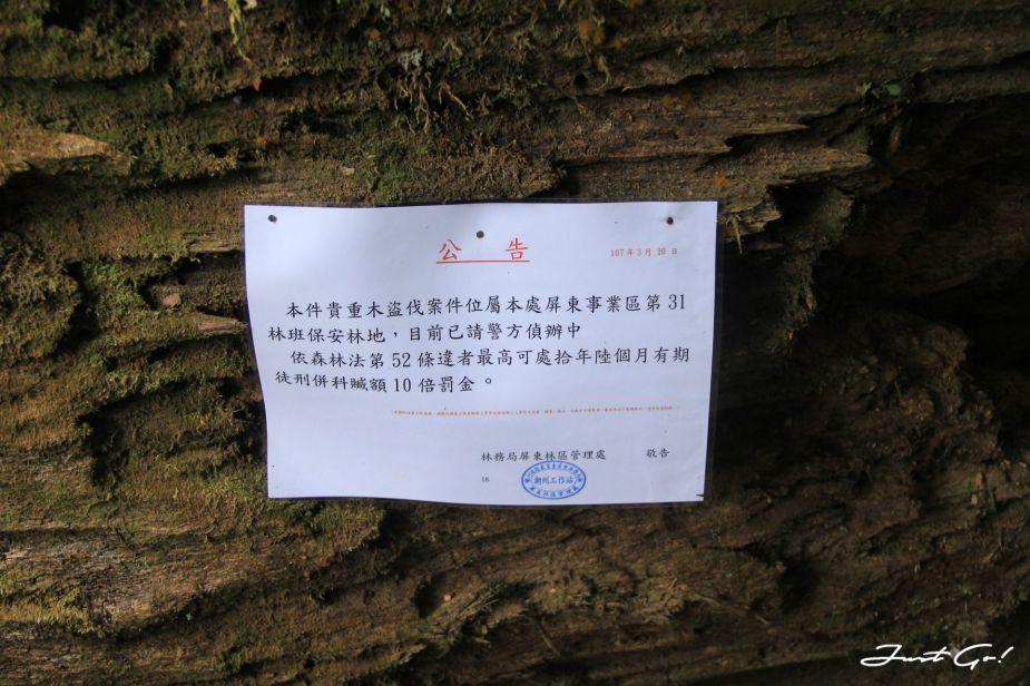 台灣 - 雲海故鄉·北大武山探訪鐵杉林- GPX路線、申請、交通、遊記11