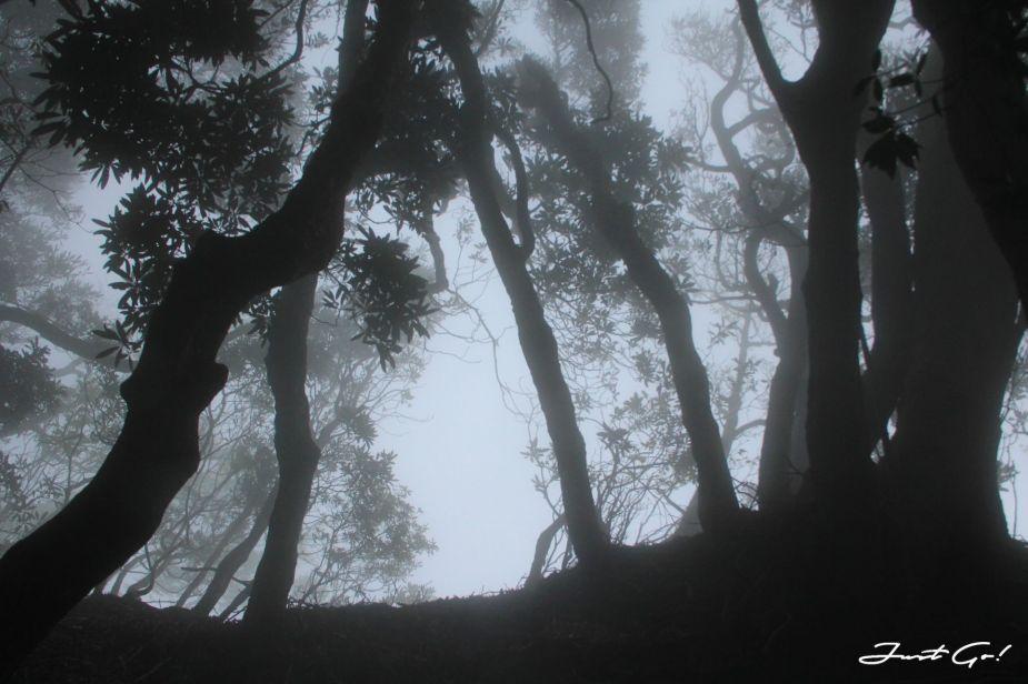 台灣 - 雲海故鄉·北大武山探訪鐵杉林- GPX路線、申請、交通、遊記6