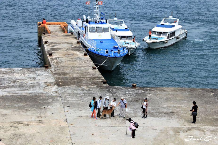 台灣 - 馬祖旅遊必去景點·大坵島·梅花鹿大量出沒-2019交通船班、住宿、美食7