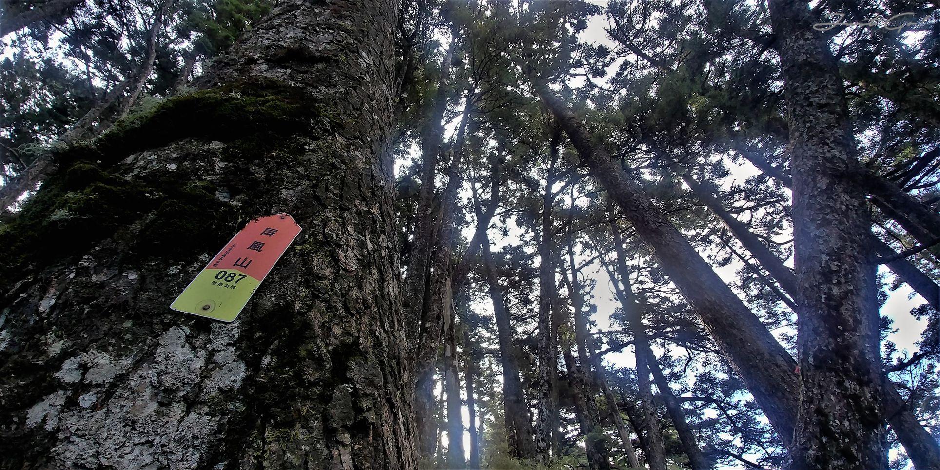 一日百岳·10小時單攻屏風山-新路線地圖gpx、行程規劃、申請、登山口6