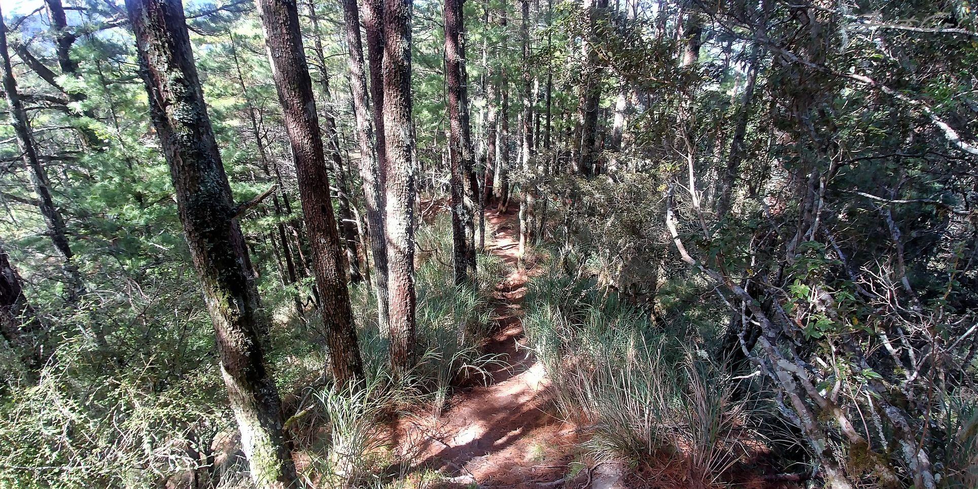 一日百岳·10小時單攻屏風山-新路線地圖gpx、行程規劃、申請、登山口7